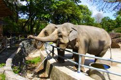 Tipy na výlet: nejlepší zoo v ČR
