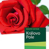 Růže k nákupu v NC Královo Pole