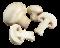 houby logo